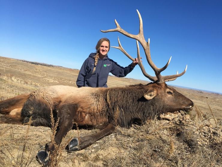 Hailey's elk 2018